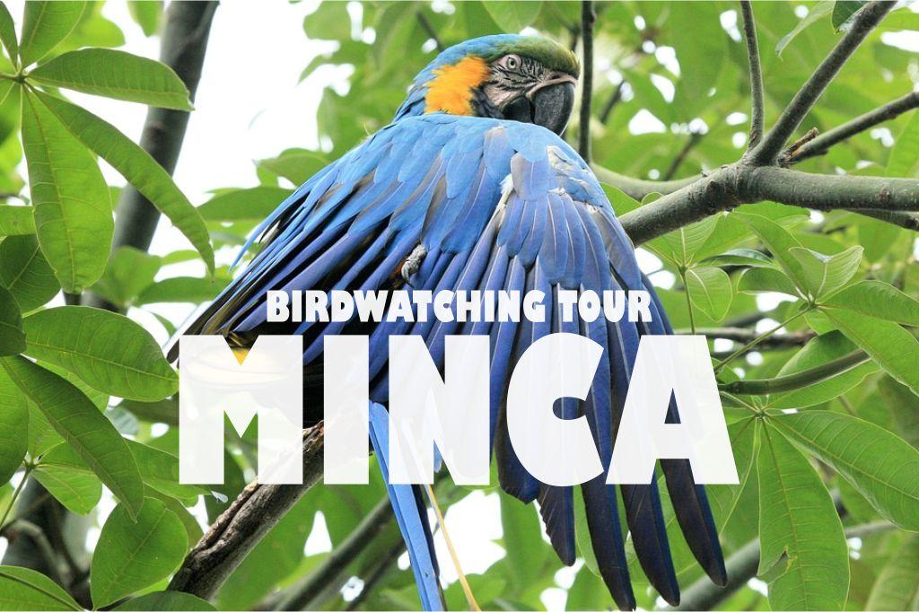 Birdwatching tour minca