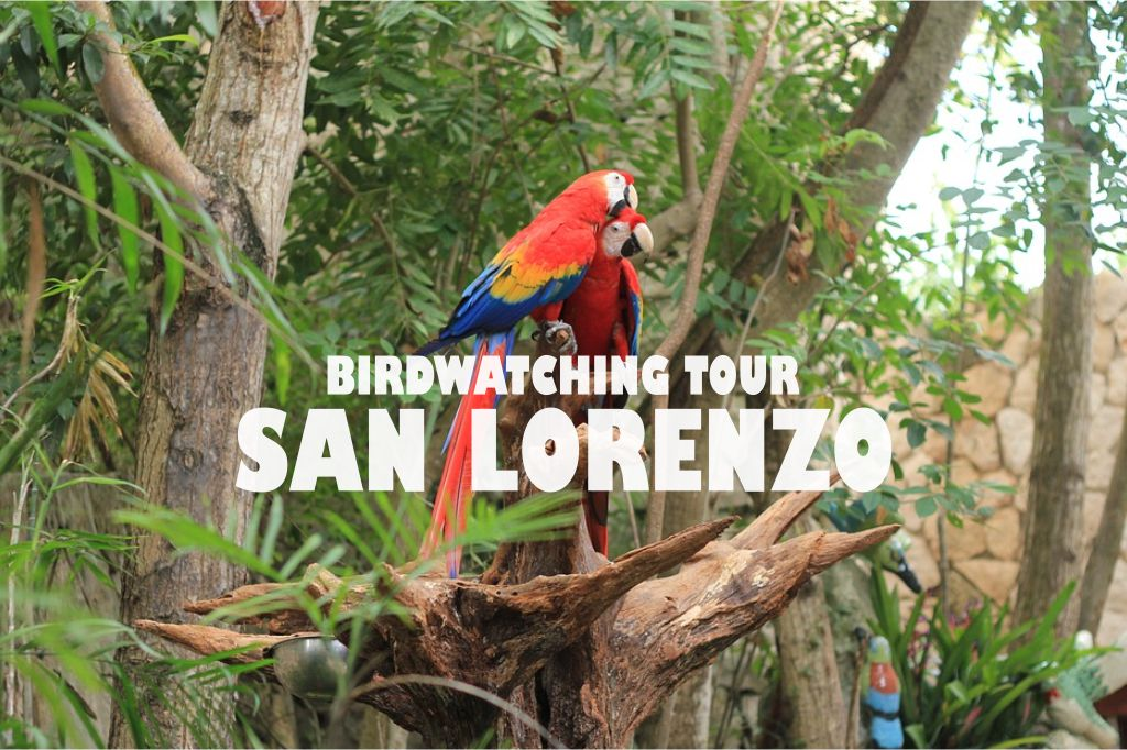 Birdwatching tour san lorenzo