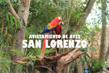 avistamiento de aves san lorenzo