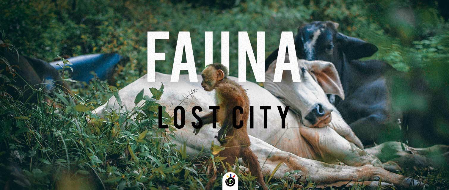 imagen de animales del camino a ciudad perdida