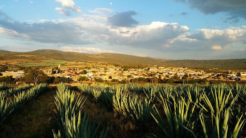destinos en México, Tequila Jalisco, Agave