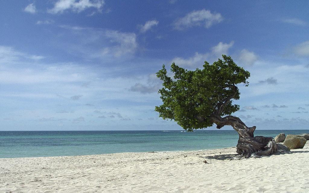 Eagle Beach – Oranjestad, Aruba. Las mejores playas del mundo