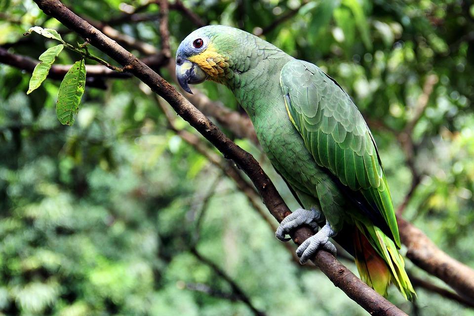 Avistamiento de aves en Minca Colombia