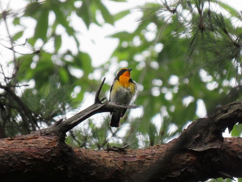 Avistamiento de aves en Minca en la Sierra Nevada de Colombia