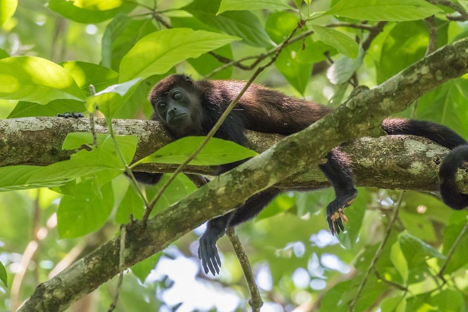 Santuario de Flora y Fauna en la Ciénaga Grande de Santa Marta Colombia