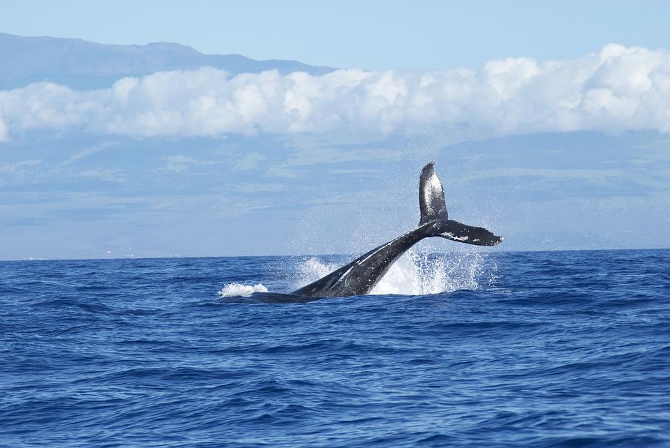avistamiento de ballenas en Nuquí