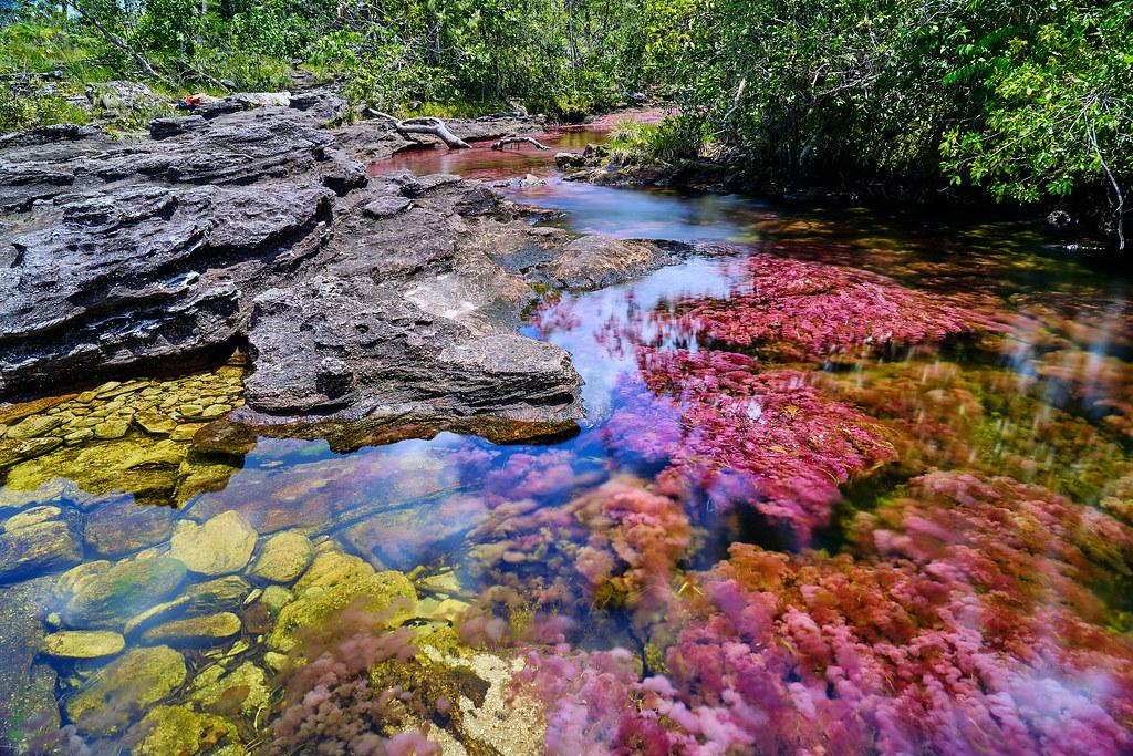 caño cristales el rio más hermoso del mundo