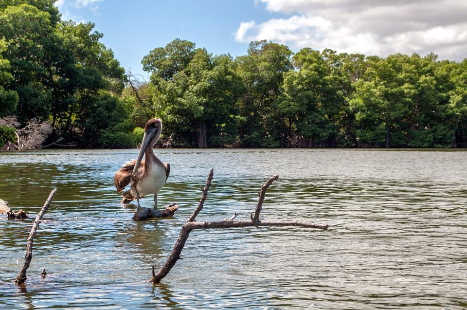 manglares en Nuquí