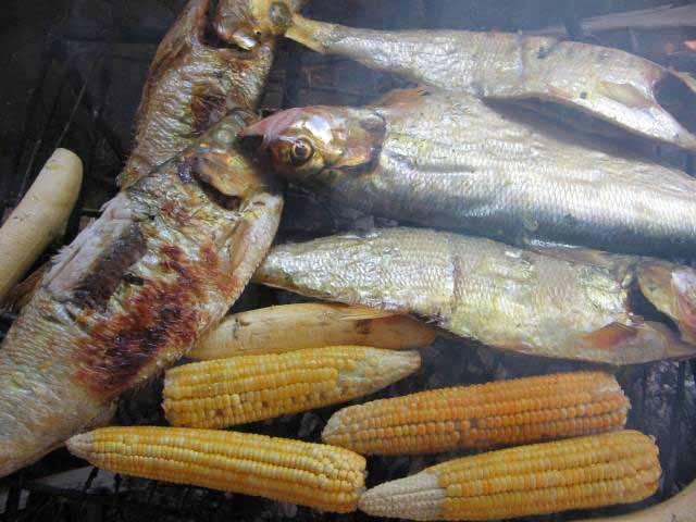 pescado moquiao guaviare