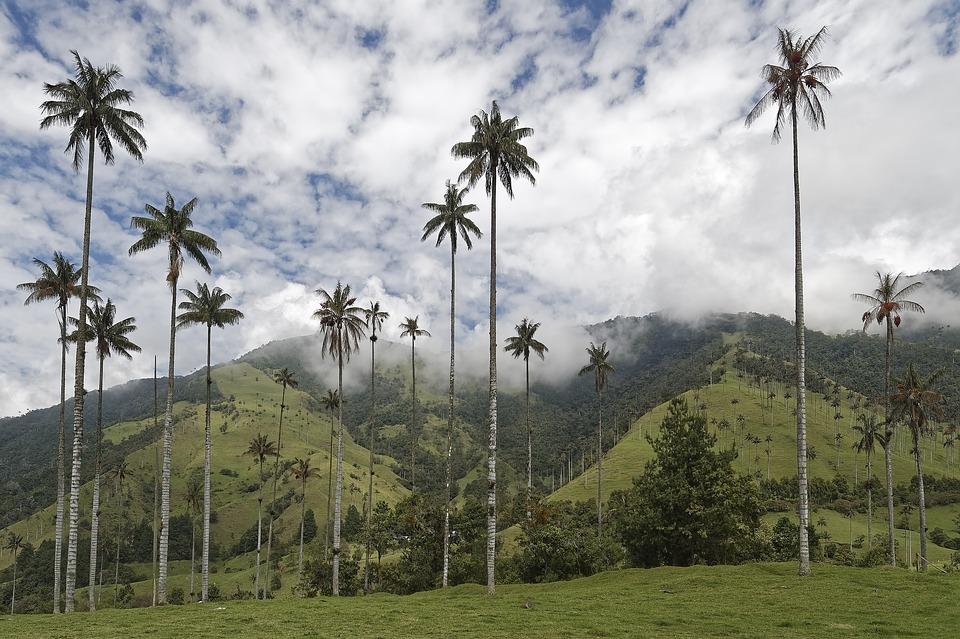 valle del cocora senderismo en colombia