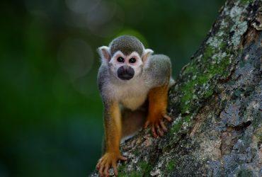 Top 5 de documentales en Netflix sobre naturaleza para ver durante la cuarentena expotur
