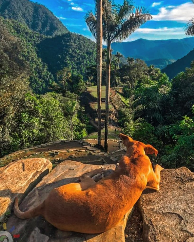 Dogs at the Ciudad Perdida. the Lost City Colombia