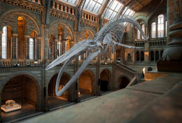 museos online