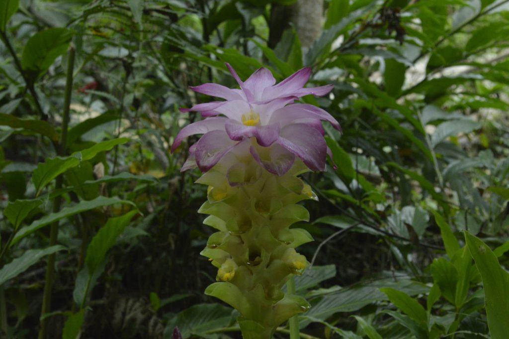 Flora tour minca expotur
