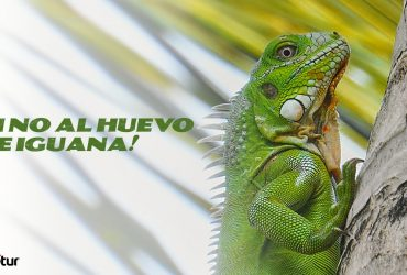 Di no al huevo de Iguana. Expotur colombia
