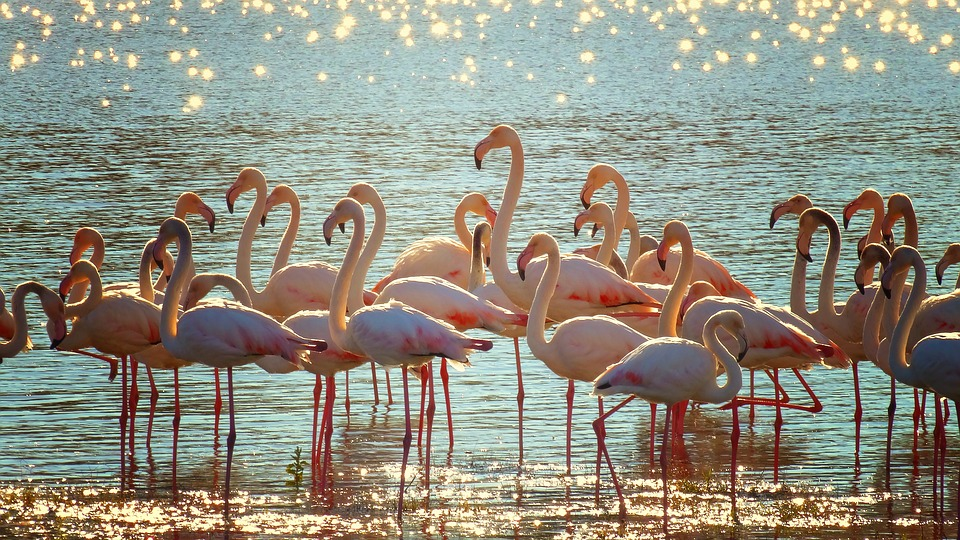 flamingos-agua y ecosistemas expotur