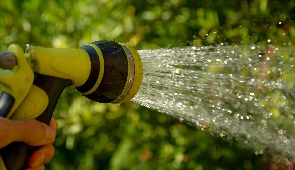riega tus plantas en la noche expotur. consejos para ahorrar agua