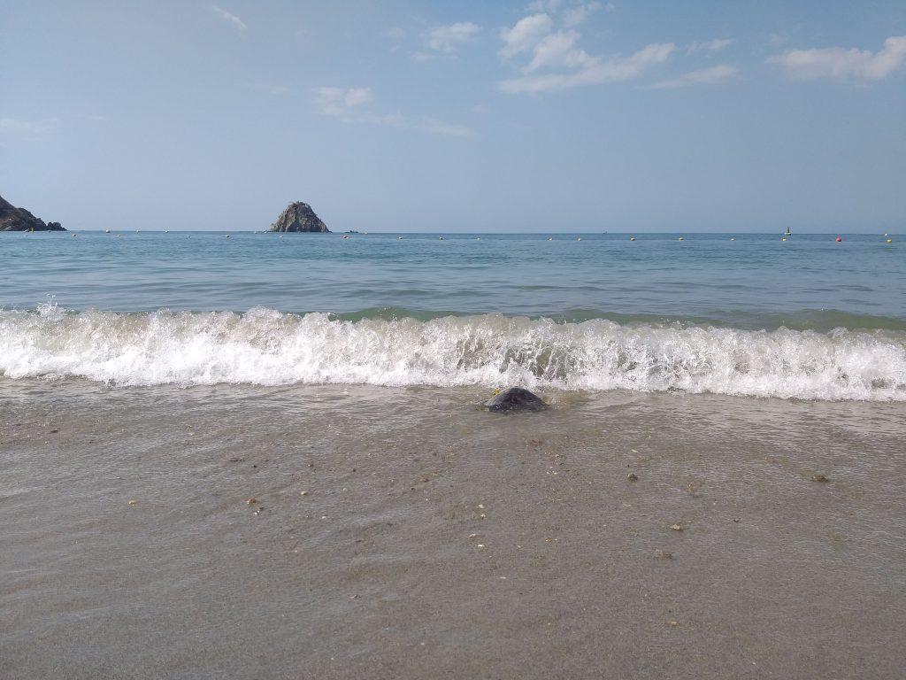 Cuándo es la época de anidación de tortugas marinas en la región del Magdalena expotur
