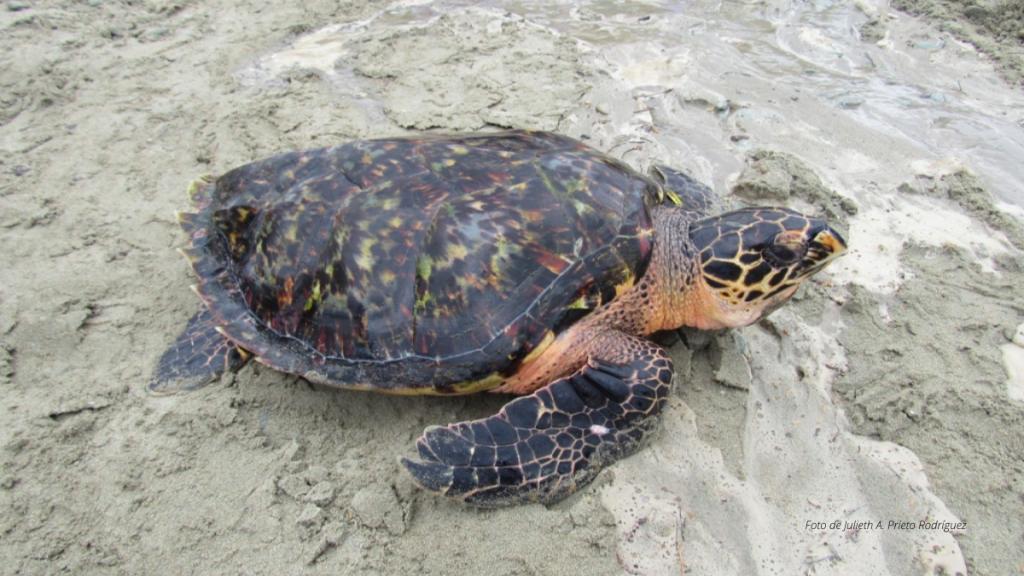 Turismo en zonas de anidación y eclosión de tortugas marinas